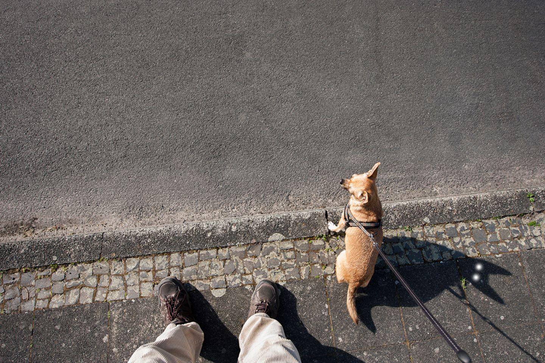 Hund in der Sonne