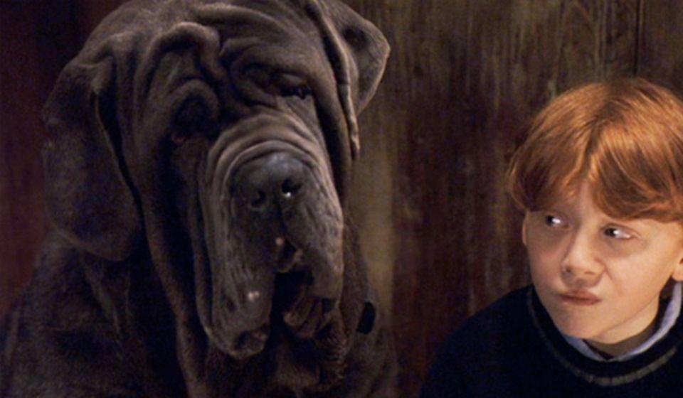 Harry Potter: Fang