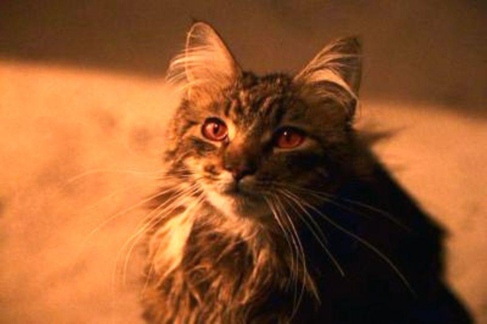 Mrs. Norris, die Katze des fiesen Hausmeisters Filch