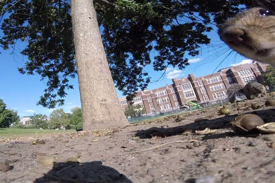 Eichhörnchen stiehlt Kamera