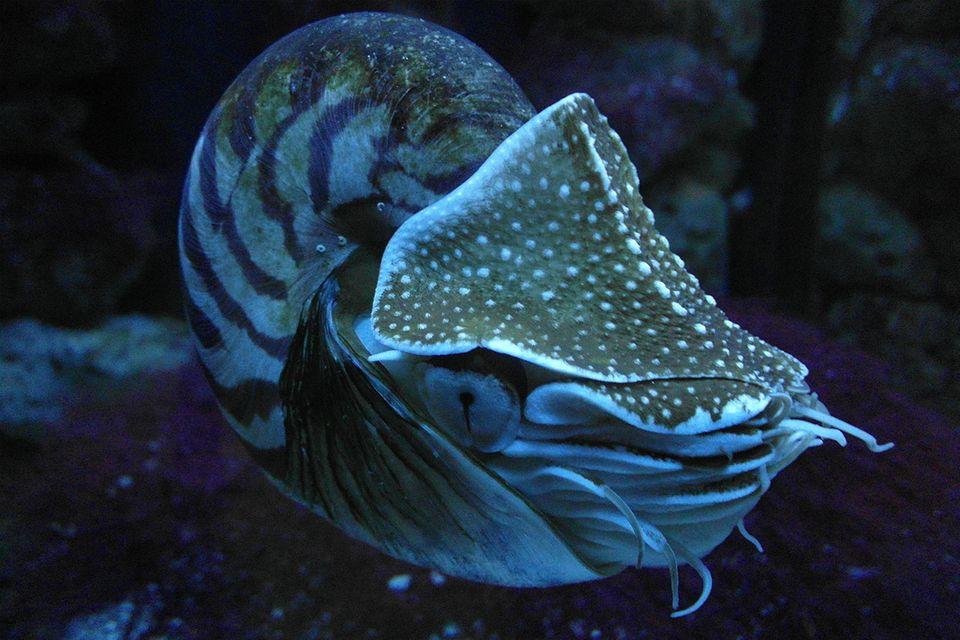 Kreatur der Tiefsee