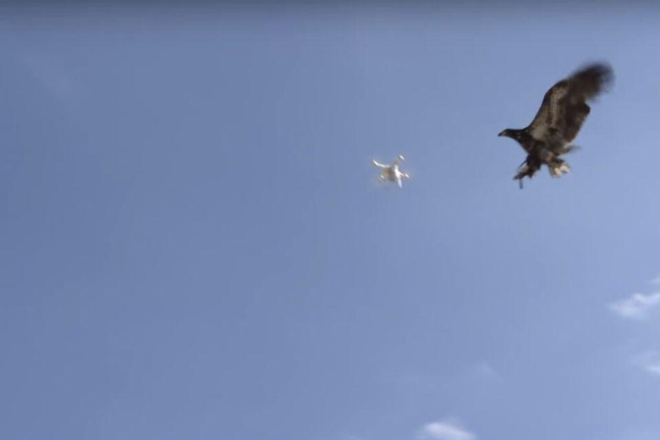 Holland: So sieht ein Einsatz der Anti-Drohnen-Adler aus