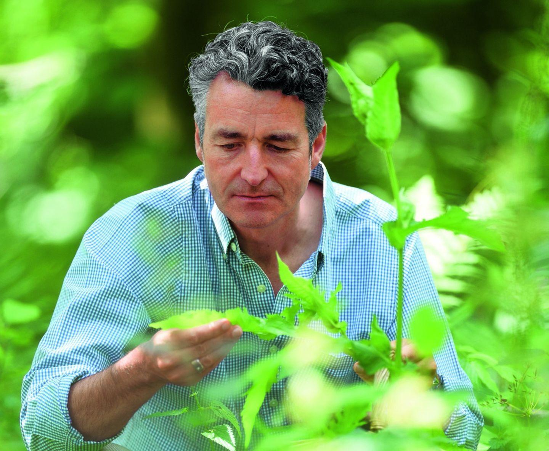 Wildpflanzen: Im feuchten Herbst sprießt noch ein letztes Mal das grüne Blattgemüse. Etwa die Sumpf-Kohldistel, deren Blätter sich hervorragend wie Spinat verwenden lassen. Dr. Markus Strauß, Jg. 1966, ist Autor zahlreicher Ratgeber über essbare Wildpflanzen