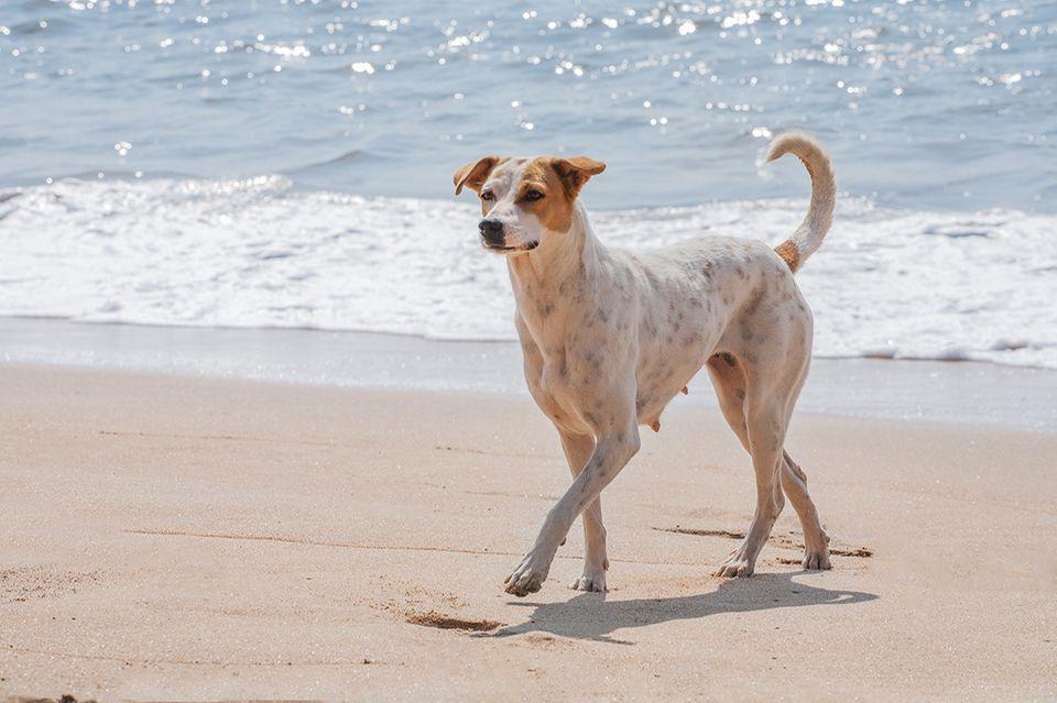 Hund am Strand am Meer