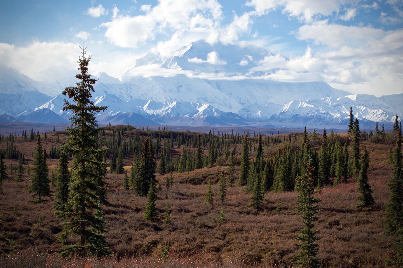Denali Nationalpark, Alaska