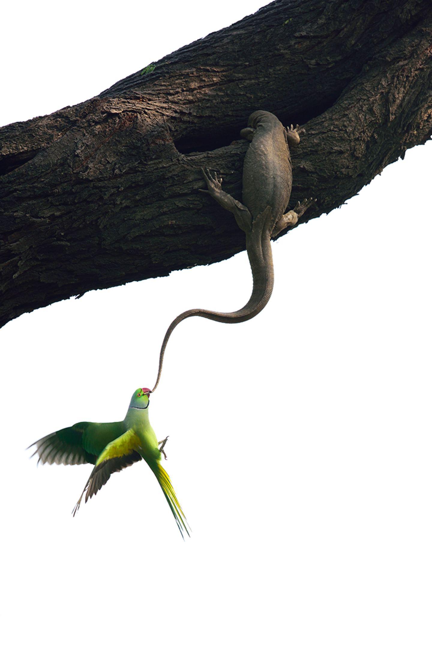 Ganesh H Shankar  / Wildlife Photographer of the Year