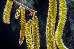 Valter Binotto  / Wildlife Photographer of the Year