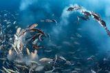 Tony Wu / Wildlife Photographer of the Year
