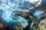 Luis Javier Sandoval / Wildlife Photographer of the Year