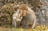 Comedy Wildlife Award: Die schrägsten Tierfotos der Welt - Bild 3