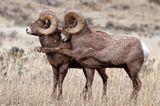 Comedy Wildlife Award: Die schrägsten Tierfotos der Welt - Bild 4