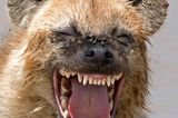 Comedy Wildlife Award: Die schrägsten Tierfotos der Welt - Bild 7