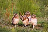 Comedy Wildlife Award: Die schrägsten Tierfotos der Welt - Bild 8