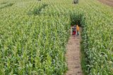 Maislabyrinth mit Kindern