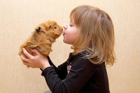 Ein Mädchen küsst ihren Hamster, als Haustier