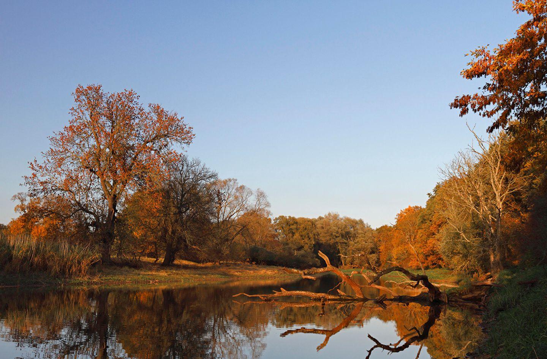 Altwasserarm der Flussauenlandschaft im herbstlichen Abendlicht, Biosphärenreservat Mittlere Elbe