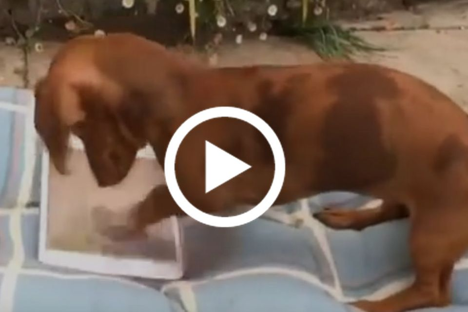 Hund spielt auf dem iPad