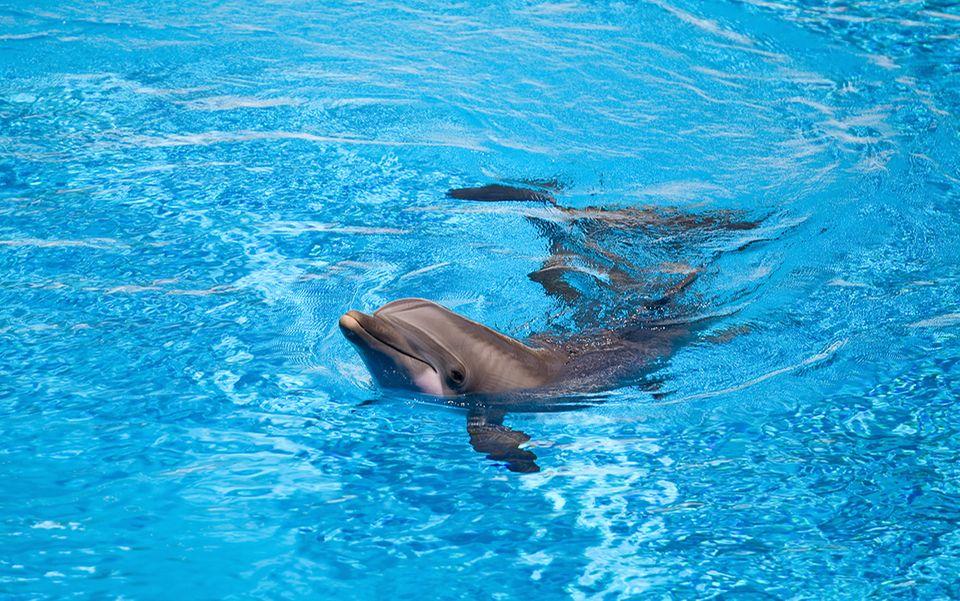Delfin im Wasser