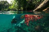 Tim Laman, In den Tiefen von Rajaampat, 01 - 02/2008