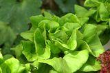 Vitamin E in Salat und Blattgemüse