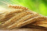 Biotin: Getreide, Leber, Hefe und Tomaten