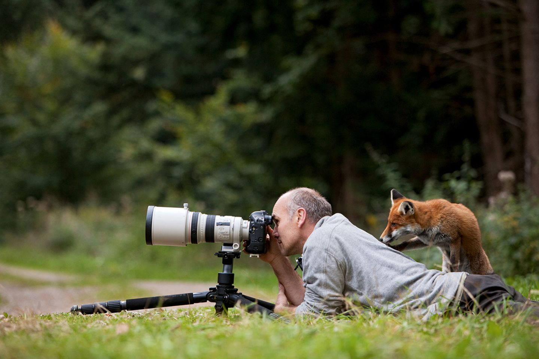 Fuchs steht auf dem Rücken des Fotografen