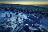 Wolfswarte im Harz