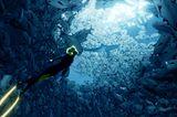Taucherin Abzu im Fischschwarm