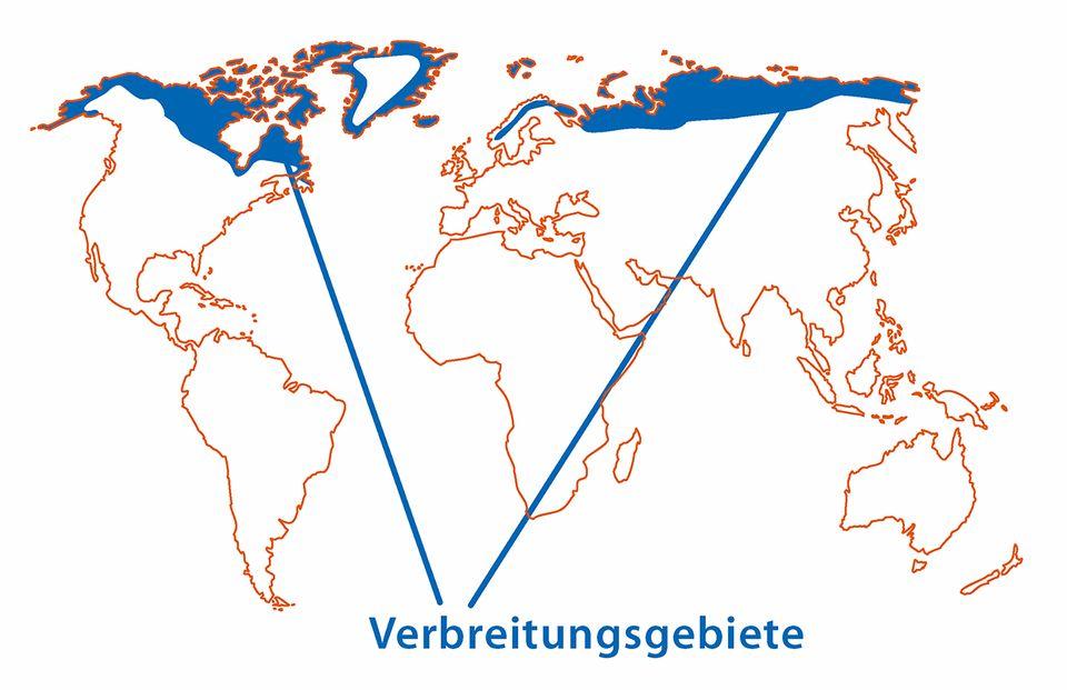 Polarfuchs Karte des Verbreitungsgebiets