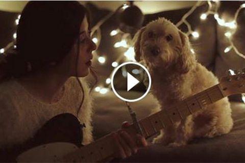 Weihnachtslied für den Hund