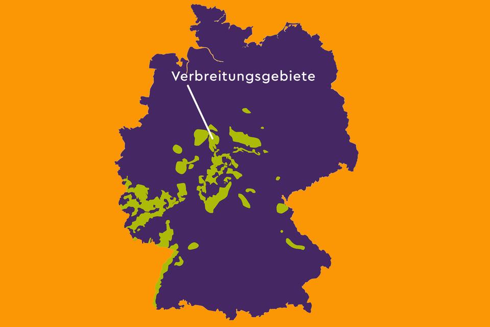 Verbreitungsgebiet der Wildkatzen in Deutschland