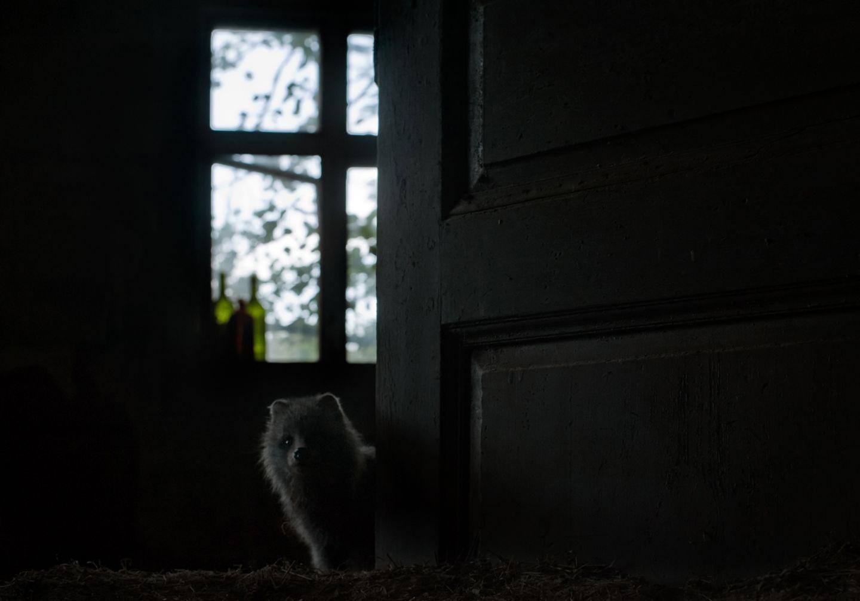 Ein kleiner Maderhund hat ein neues Zuhause