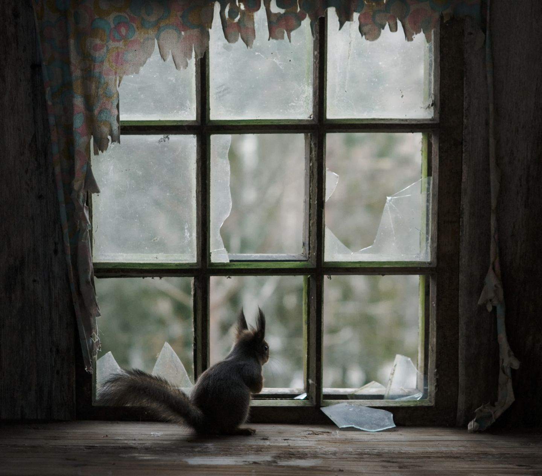 Eichhörnchen blickt aus einem Fenster