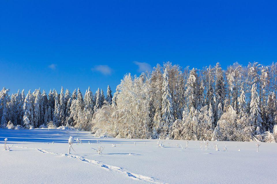 Schneebedeckte Landschaft im Winter