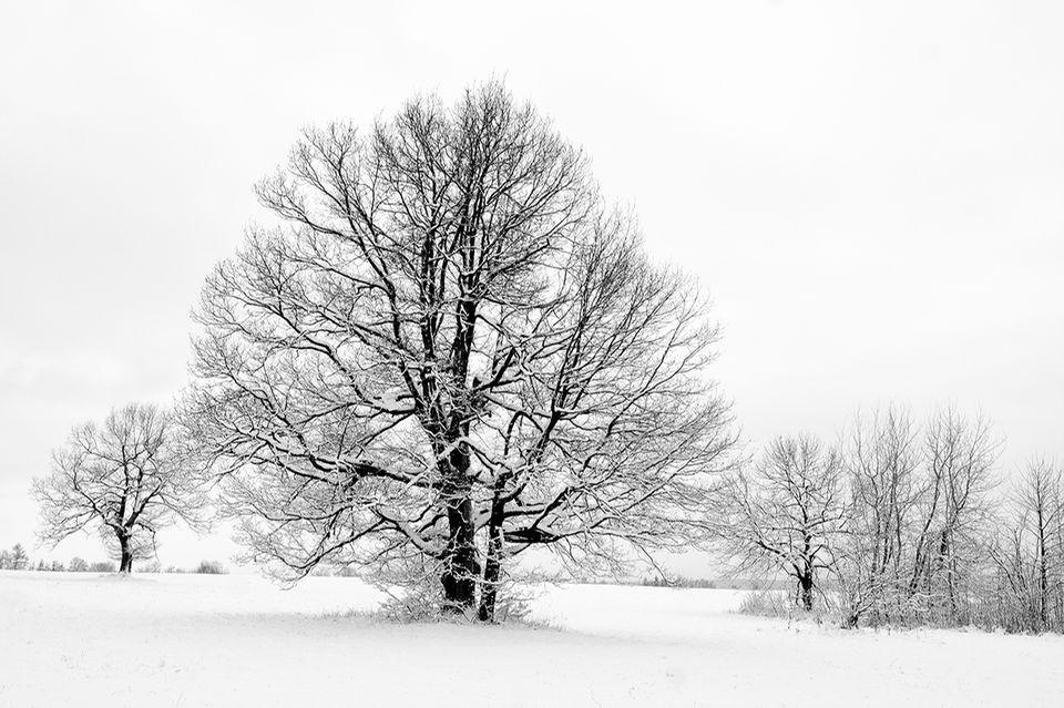 Kahler Baum im Schnee