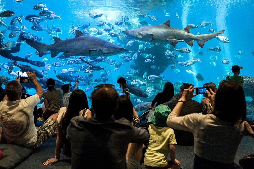 Aquarium, Ses Fontanelles, Mallorca