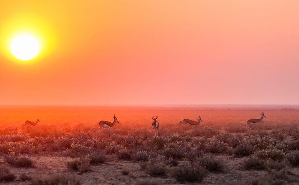 Etosha-Nationalpark, Namibia