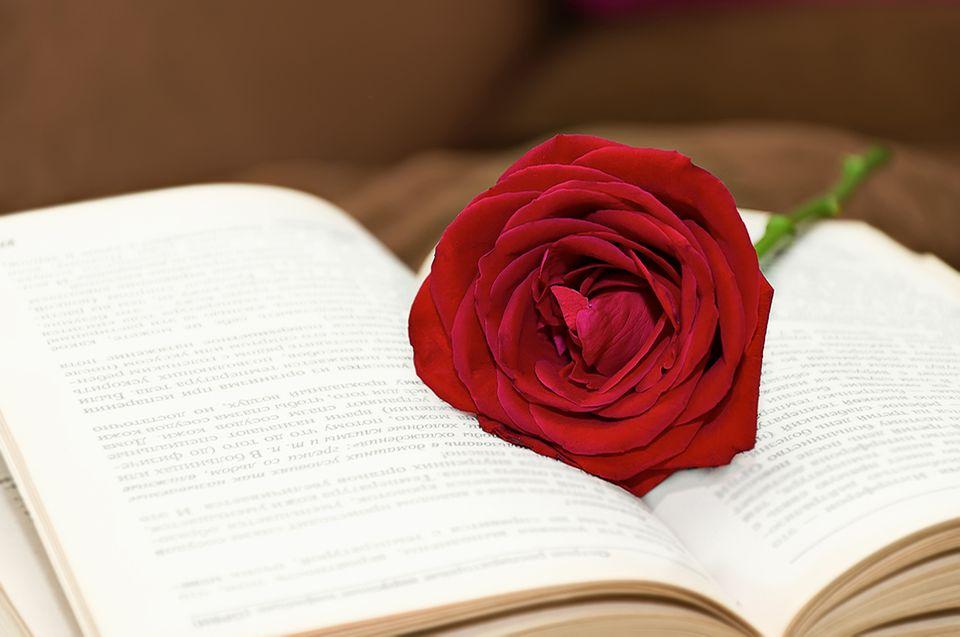 Buch und rote Rose