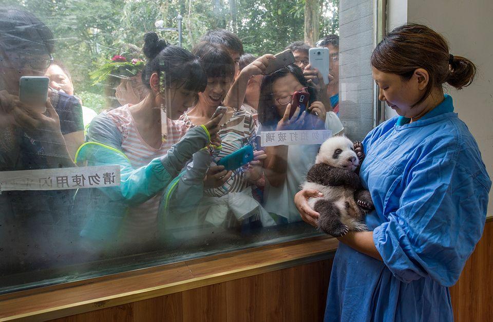 Pflegerin mit einem Pandababy auf dem Arm und Touristen