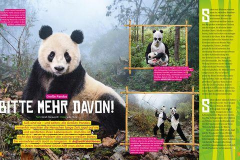 Doppelseite Pandas GEOlino