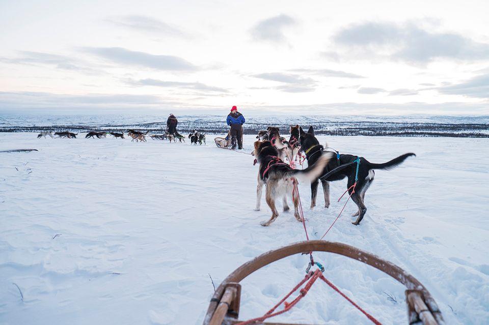 Hundeschlitten, Finnland