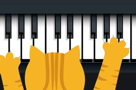 Katze spielt am Klavier