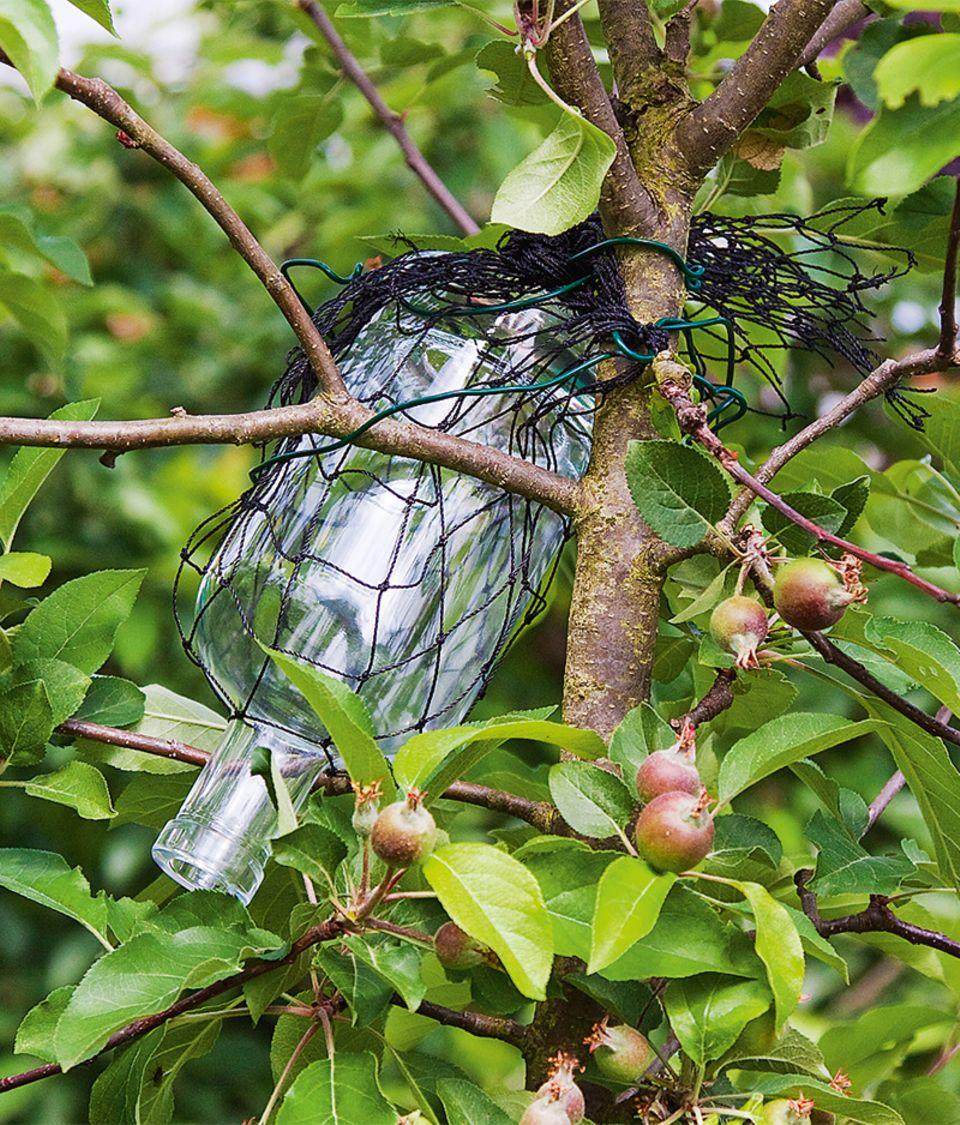Flasche mit Apfel hängt im Baum