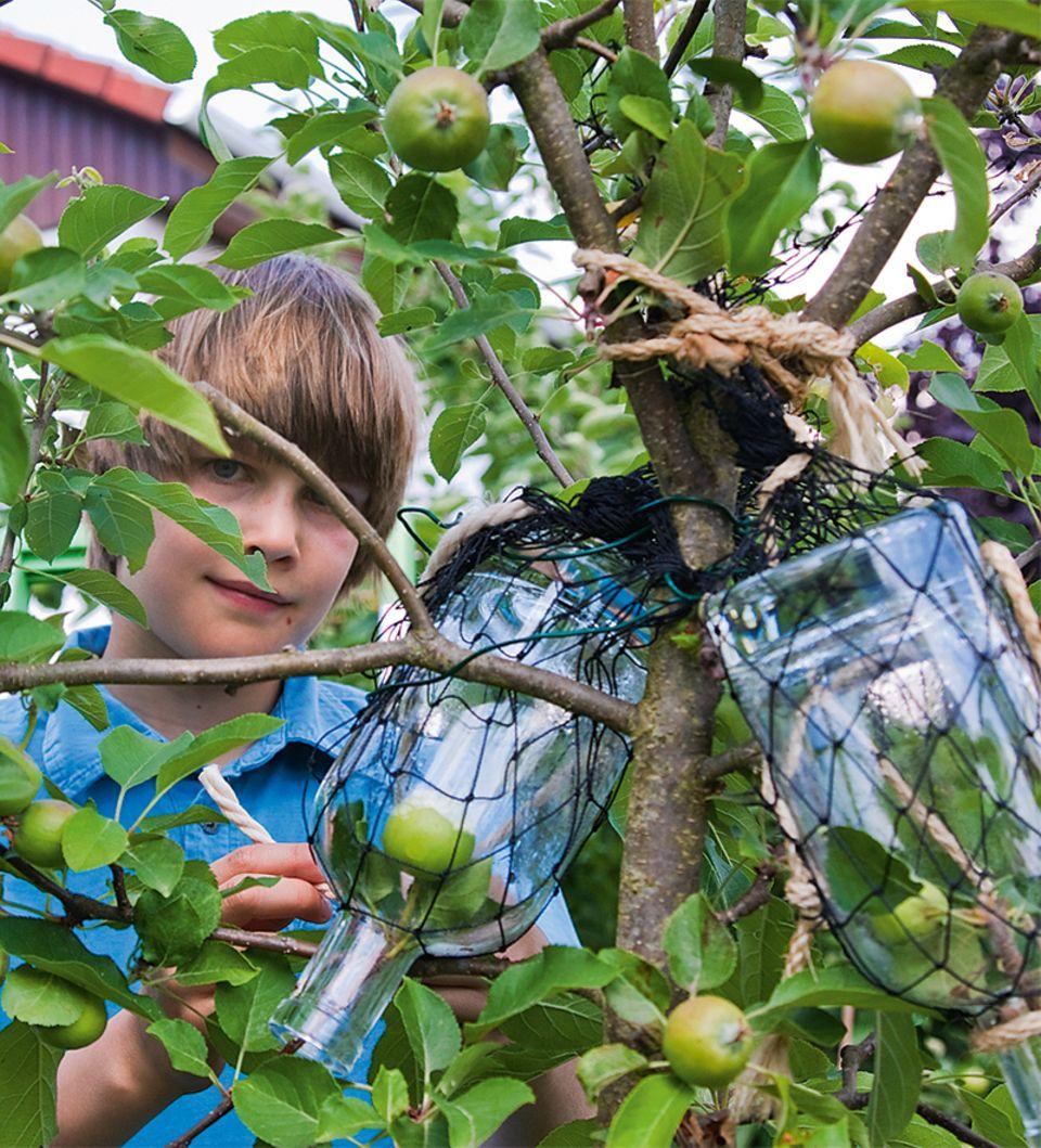 Junge am Apfelbaum