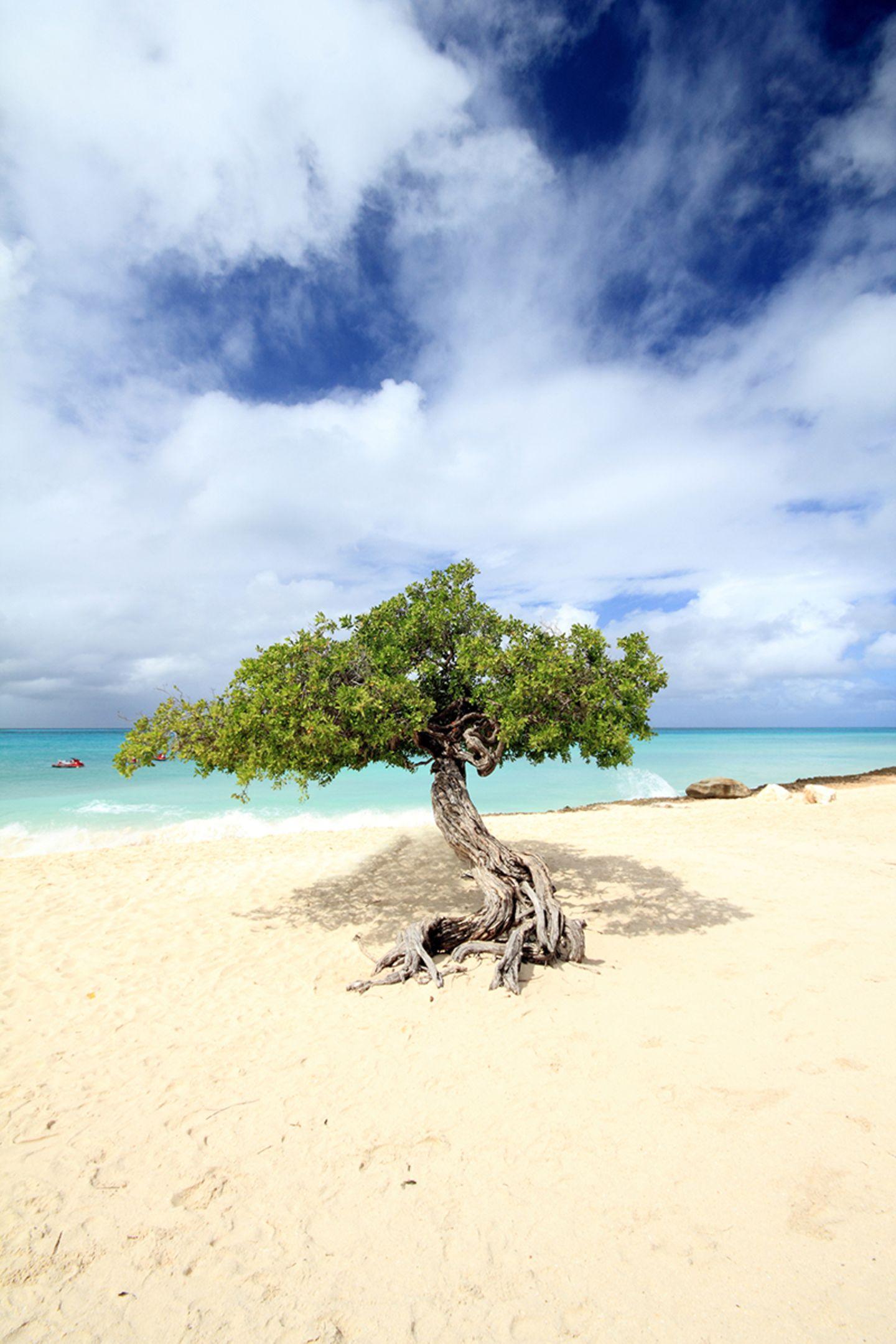 Eagle Beach - Aruba