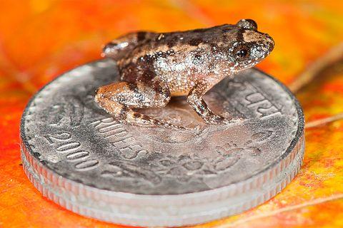 Frosch sitzt auf Münze