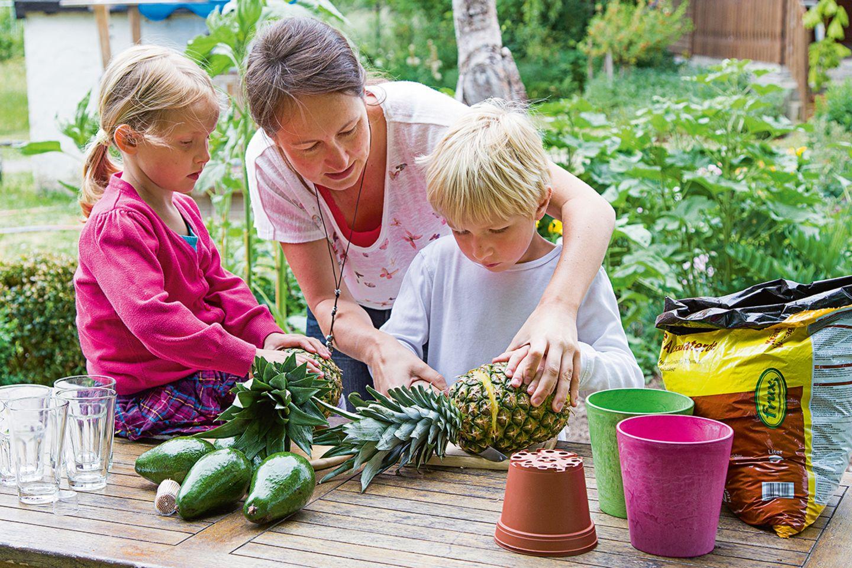 Mutter mit Kindern züchtet Ananas