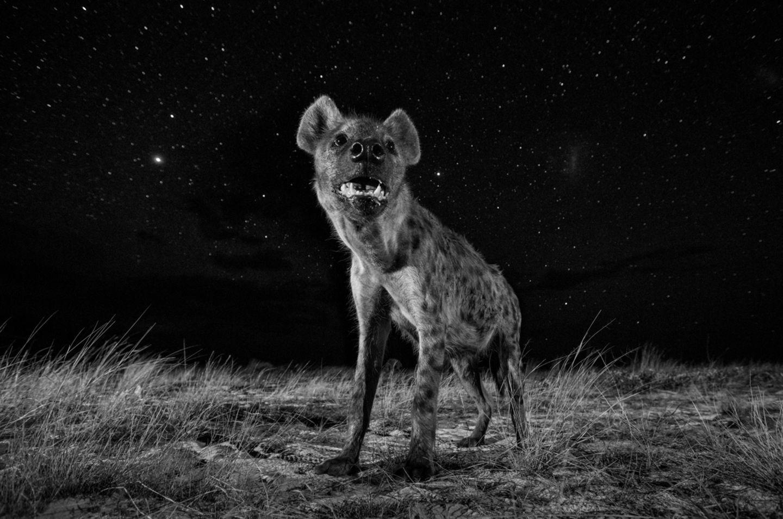 Will Burrard-Lucas, United Kingdom, Shortlist, Professional, Natural World, 2017 Sony World Photography Awards