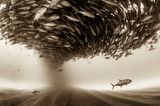 Christian Vizl, Mexico, Shortlist, Professional, Natural World, 2017 Sony World Photography Awards