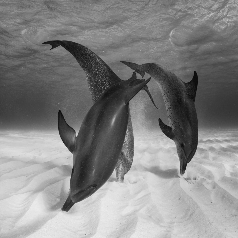 Eugene Kitsios, Netherlands, Shortlist, Open, Wildlife, 2017 Sony World Photography Awards